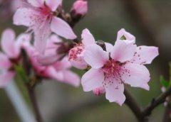 春季滋润脾胃食谱 助你远离便秘困扰